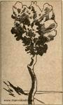 Рисунок М.А. Волошина